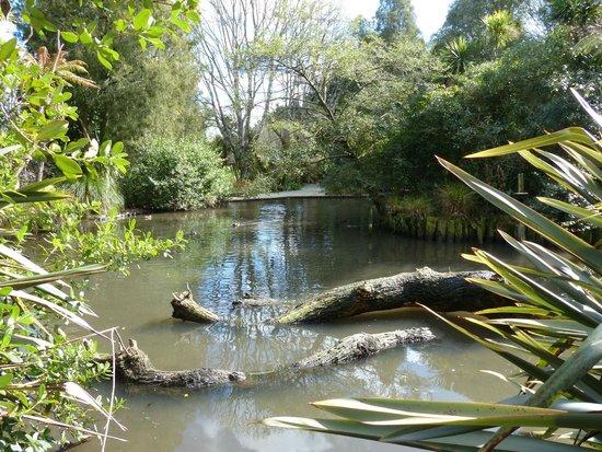 Otorohanga Kiwi House & Native Bird Park: The Otorohanga Native Bird Park