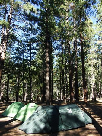 North Rim Campground: Camping sous les arbres