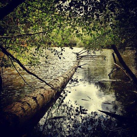 Tilden Regional Park: Jewel Lake, Tilden Park