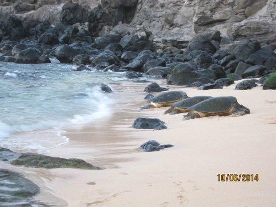 Open Eye Tours & Photos: Turtles resting on the beach