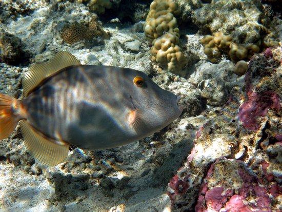 Aroa Marine Reserve: Fille Fish