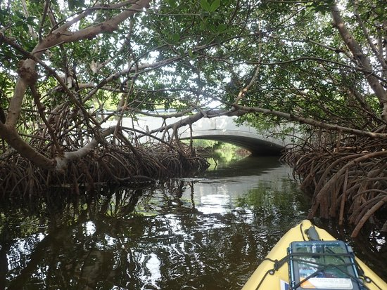 curry hammock state park  a bridge you kayak under at the end of the mangrove a bridge you kayak under at the end of the mangrove creek      rh   tripadvisor