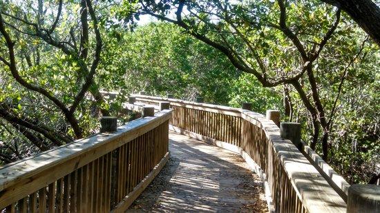 Robinson Nature Preserve: boardwalk