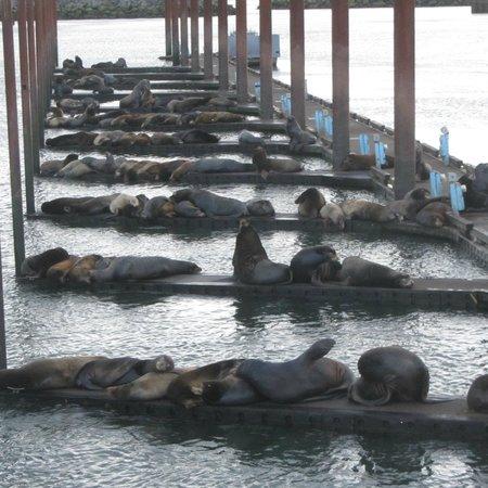 Comfort Suites Columbia River: Sea Lions!