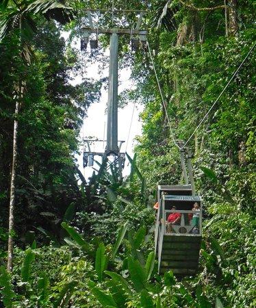 Veragua Rainforest Park: Riding the aerial tram