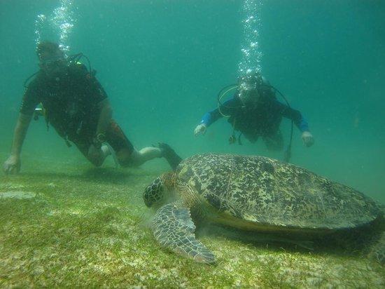 Scandi Divers: Big turtle having his lunch