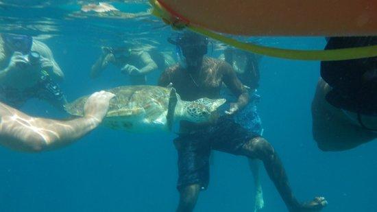 Jammin Catamaran Cruises: Swimming with the turtles