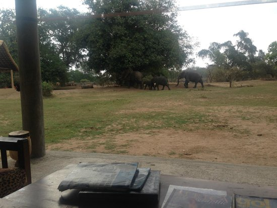 Marula Lodge: elephants during tea time
