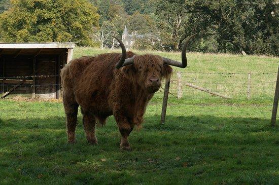 Trossachs Woollen Mill: Hamish!