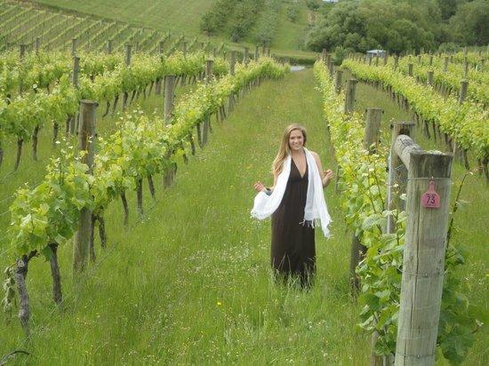 Bronte, Nouvelle-Zélande : Spring!