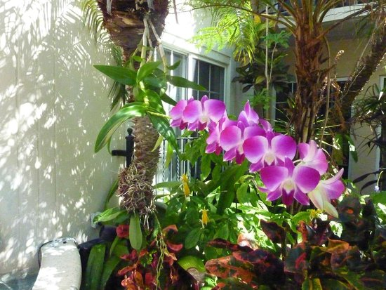 La Casa Hotel: Orchids Growing Out Of Palms   Beautiful Pool Patio!