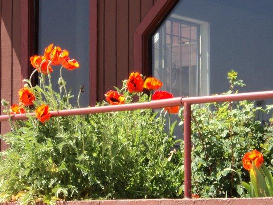 Ferrari's Crown Resort: California Poppies