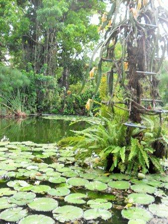 Foto de jardin botanico la laguna san salvador turtles for Lagunas de jardin