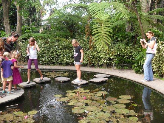turtles picture of jardin botanico la laguna san