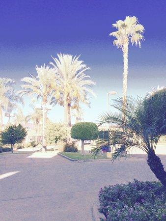 Fairfield Inn Anaheim Hills Orange County: can't beat the palm trees.
