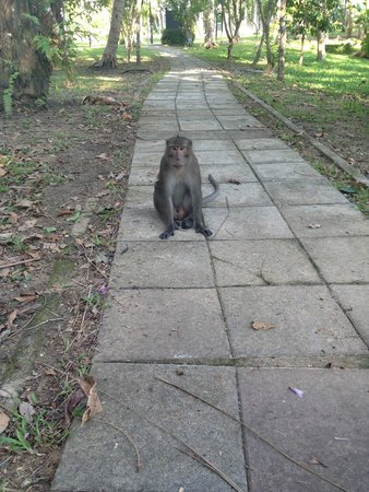 Maritime Park & Spa Resort: Monkey in the grounds