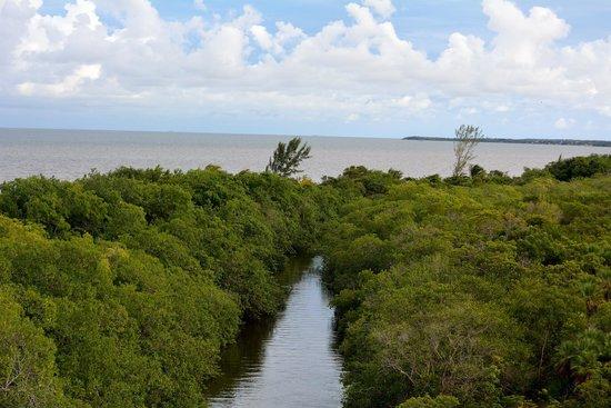 Hopkins Bay Resort: The lagoon