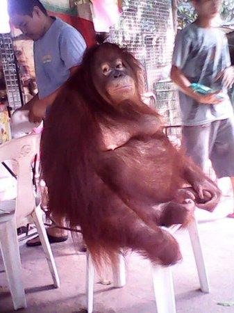 Malabon Zoo: Baby Orangutan