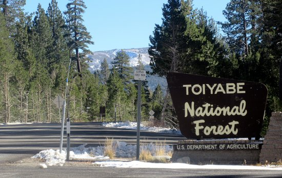 ‪Toiyabe National Forest‬
