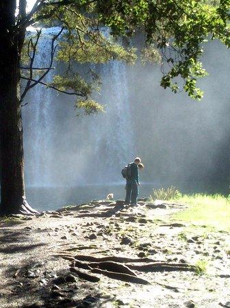 Whangarei, Nueva Zelanda: visitors in the mist