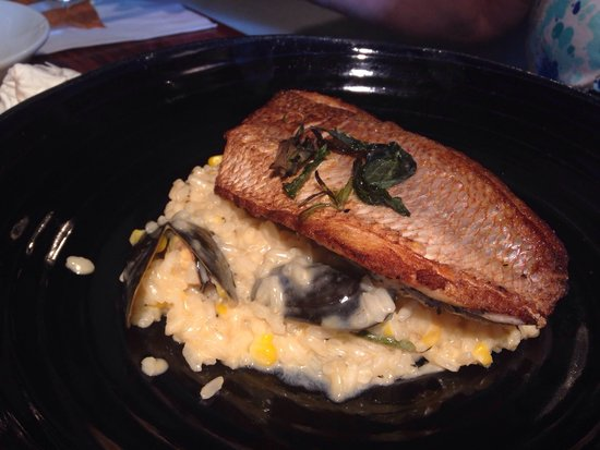 Shila - Sharon Cohen's Kitchen & Bar: Farida on risotto. A great fish but the risotto is a mismatch. Prefer a Farida on a platter (see