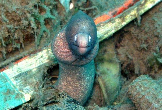 Miguel's Diving Gorontalo: a inquisitive EEl