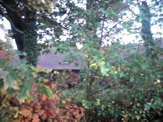 Faumont, France : Il se cache dans la forêt