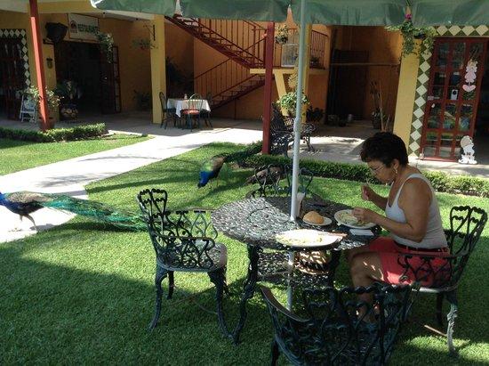 El Morichal: Lugar para disfrutar de la vista de pavo reales y un buen desayuno