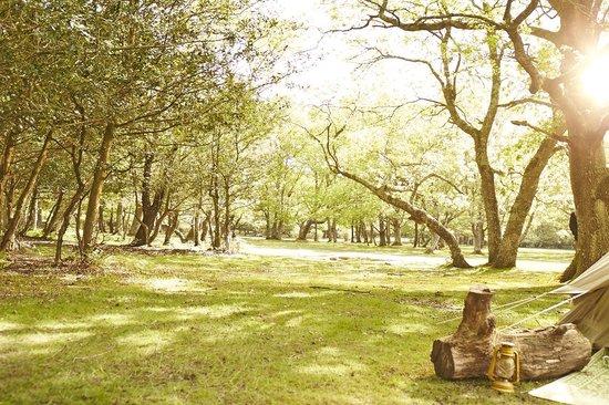 Hollands Wood Campsite