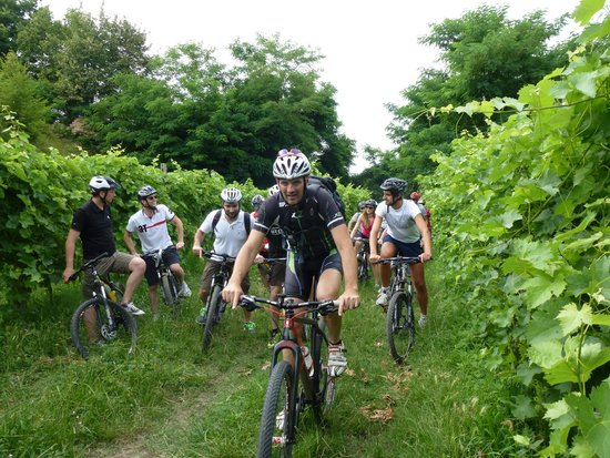 Bike Veneto - Rent a Bike, Excursions and tours by bicycle
