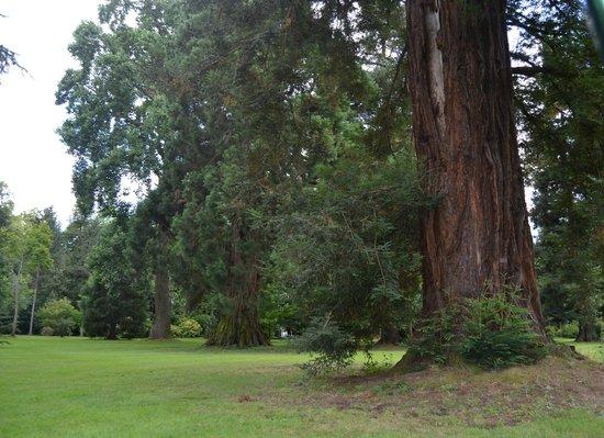 Jardin Massey : une partie du parc