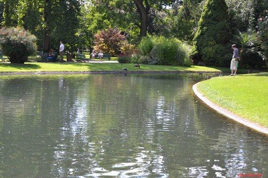 Jardin Massey : le petit cours d'eau où l'on peut voir d'énormes poissons