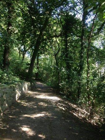 Coteaux de la Citadelle : le bois des Carmélites