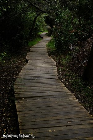 Helderberg Nature Reserve : Boardwalk into the shade