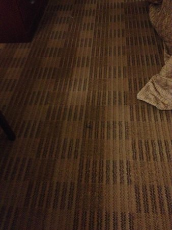 Extended Stay America - Washington, D.C. - Springfield: Carpet Stains