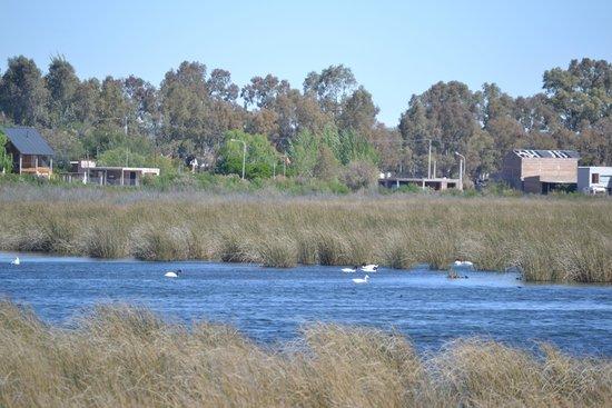 Province of Rio Negro, Argentina: avistaje de aves