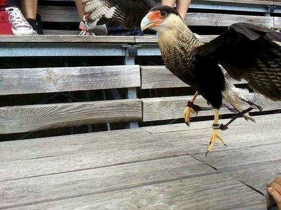 Parc de Courzieu : oiseau à portée de main