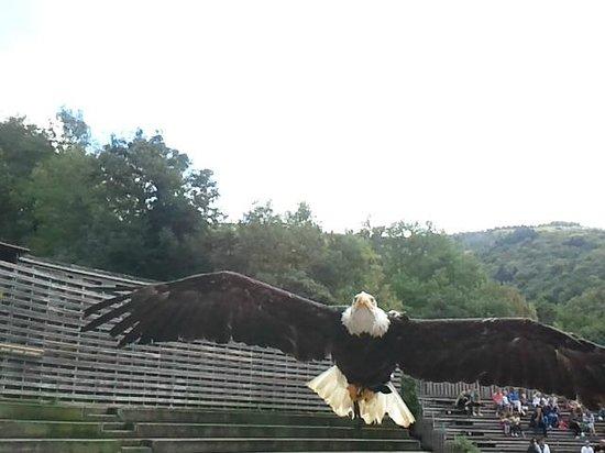 Parc de Courzieu : des oiseaux magestueux