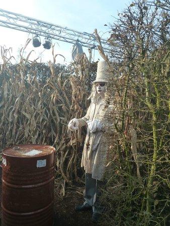 Halloween Toverland 2019.Halloween In Het Park Foto Van Attractiepark Toverland