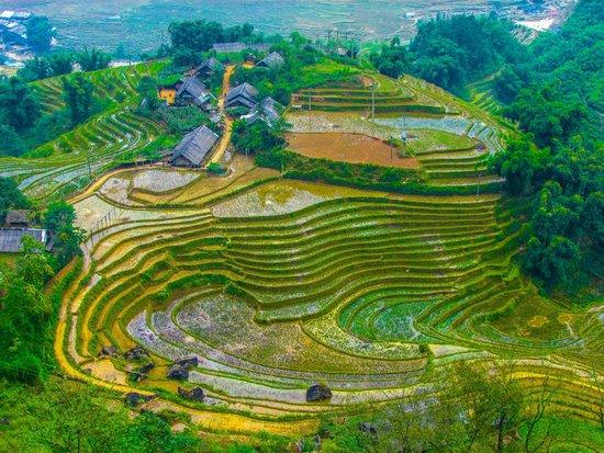 VivuTravel : Terraced rice paddies of Sapa