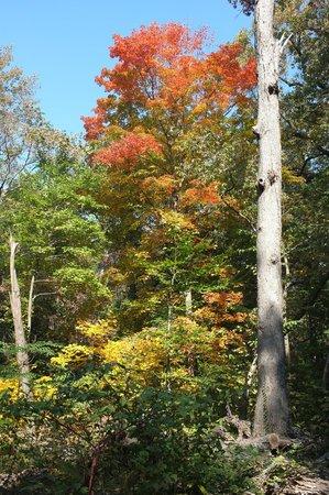 Cylburn Arboretum: The autumn leaves.....