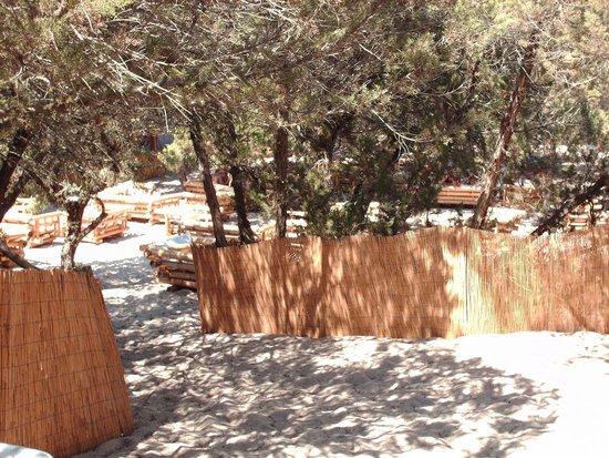 Punta Prosciutto, Italie: panoramica della pinetina annessa al bar