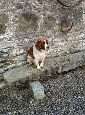 Moate Lodge: the most friendly farm dog I've ever met