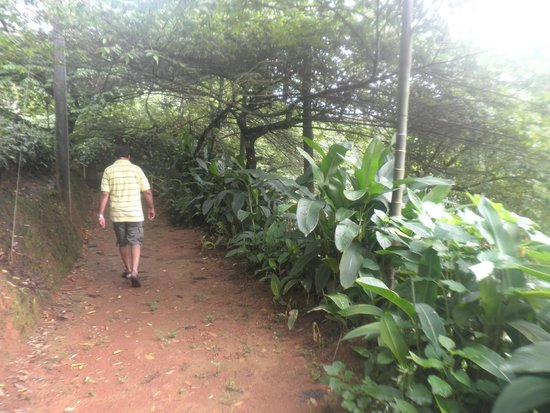 Meenmutty Heights: trail