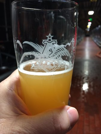 Budweiser Brewery Tours: Shock Top - BONUS!