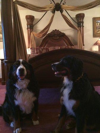 Bavarian Ritz Hotel: Pups feeling pampered