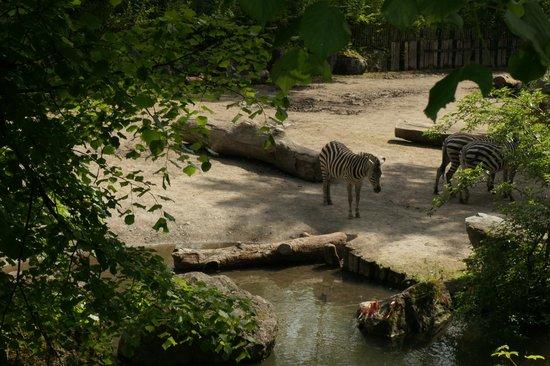 Parc Zoologique: Les Zèbres