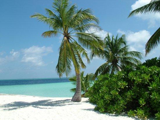 Biyaadhoo Island: Beach