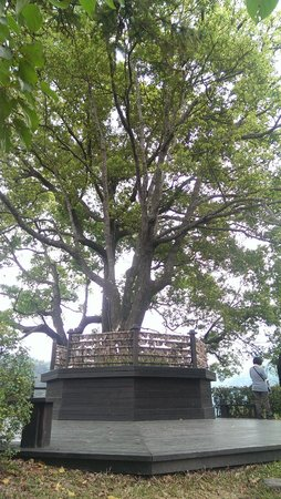 Lavender Cottage: 薰衣草小山坡最上面的那顆許願樹