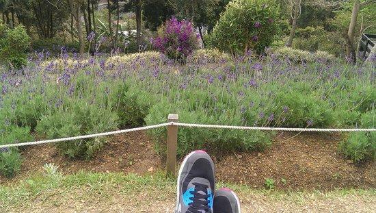 Lavender Cottage: 長滿薰衣草的小山坡